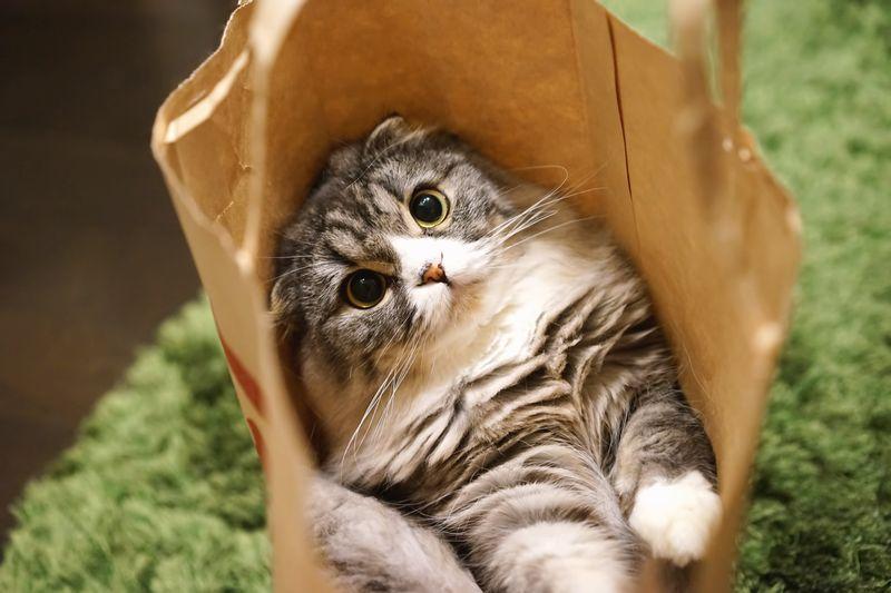 紙袋 猫 かわいい