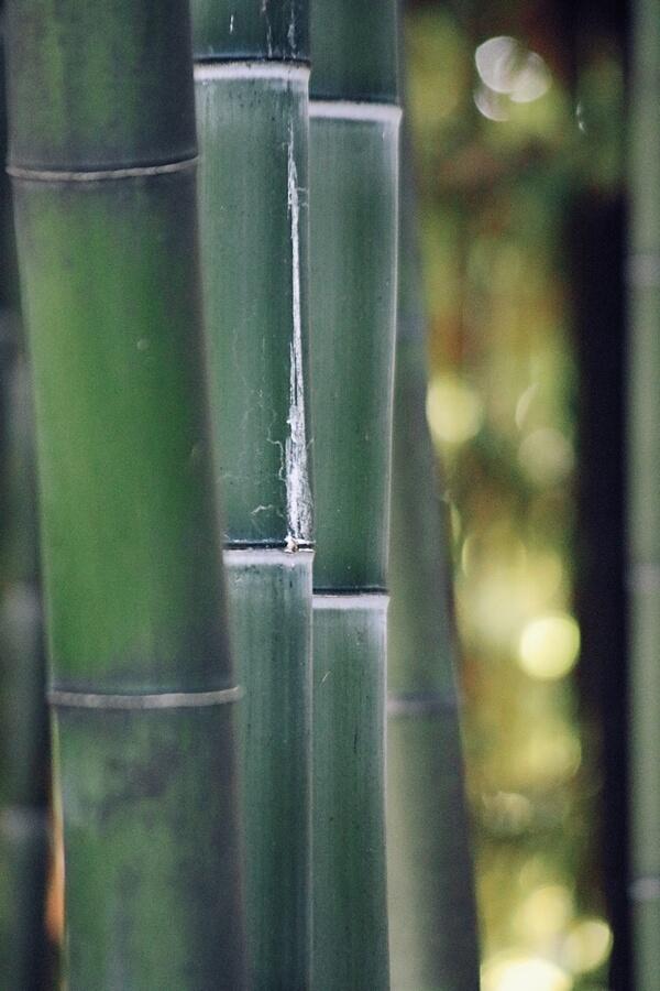 竹 竹割箸